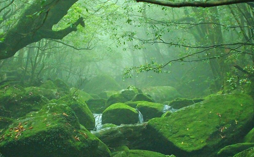The 5 Most Beautiful Forests in the World