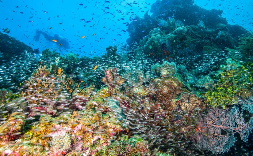 Reef Shark Diving Safari